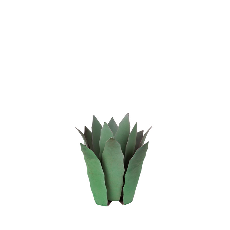 Cactus Agave S